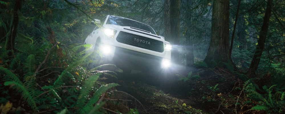2020 Toyota Tundra in Forest