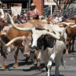 Hiley Mazda of Fort Worth local blog