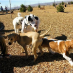 The best dog parks in Fort Worth, TX