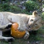 Spooky Activities For Halloween in Fort Worth, TX