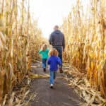 Two young girls walking through a corn maze with Dad.